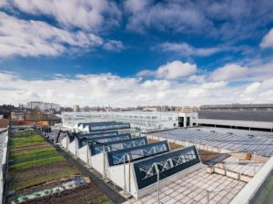3.3 Urban farming and local organic products in and near Brussels
