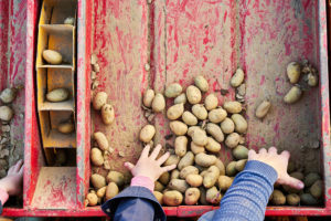 3.2 Belgian Farming Specialities: BBB, Potatoes, Endives and Strawberries